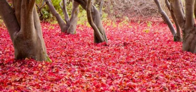 10 zanimljivosti koje niste znali o drveću